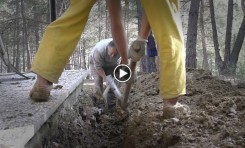 Video: WWOOFing Isn't Necessary For Cats Who Farmstay Volunteer