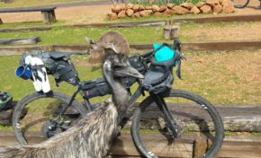 Cycling the 1000km Munda Biddi Trail In Australia