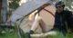 mont moondance tent